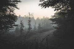 In den Abstand auf einem nebeligen hellen Himmelmorgen weg gehen stockfotografie