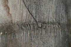 den abstrakt bakgrundsdetaljen gömma i handflatan texturtreestammen Royaltyfria Bilder