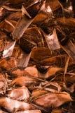 den abstrakt bakgrundsdetaljen gömma i handflatan trä för texturtreestammen Arkivfoto