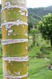 den abstrakt bakgrundsdetaljen gömma i handflatan trä för texturtreestammen Arkivbild