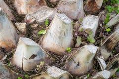 den abstrakt bakgrundsdetaljen gömma i handflatan trä för texturtreestammen Royaltyfria Foton