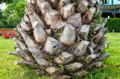 den abstrakt bakgrundsdetaljen gömma i handflatan trä för texturtreestammen Arkivbilder