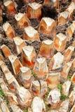 den abstrakt bakgrundsdetaljen gömma i handflatan trä för texturtreestammen Royaltyfri Foto