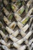 den abstrakt bakgrundsdetaljen gömma i handflatan trä för texturtreestammen Royaltyfri Fotografi