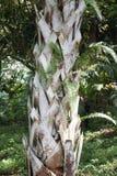den abstrakt bakgrundsdetaljen gömma i handflatan trä för texturtreestammen Royaltyfria Bilder