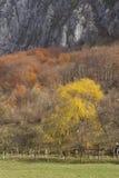 Den abstrakt berghösten landskap arkivbilder