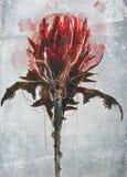 den abstrakt blommaillustrationen för kortet etc royaltyfri foto
