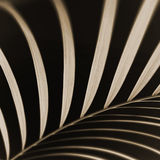 den abstrakt closeupleafen gömma i handflatan Arkivbilder