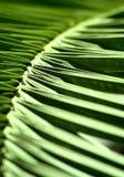 den abstrakt leafen gömma i handflatan Arkivbild