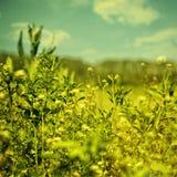 Den abstrakt sommaren landskap för din design Arkivfoton