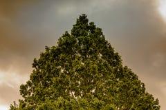 Den abstrakta bilden av en triangel bildade vid en treetop framme av en dyster och hota himmel Arkivbilder