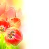 Den abstrakta designen blommar bakgrund - konstnärlig stil Arkivfoton