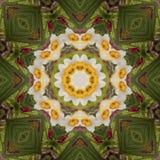 Den abstrakta kalejdoskopet med påskliljan blommar på vår Arkivbild
