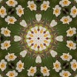 Den abstrakta kalejdoskopet med påskliljan blommar på vår Arkivfoto