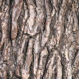 Den abstrakta modellen av skället på gammalt sörjer trädet Arkivbild