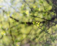 Den abstrakta naturen lämnar oskarp bakgrund Royaltyfri Fotografi
