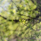 Den abstrakta naturen lämnar oskarp bakgrund Fotografering för Bildbyråer