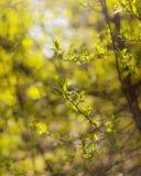 Den abstrakta naturen lämnar oskarp bakgrund Royaltyfria Bilder