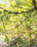 Den abstrakta naturen lämnar oskarp bakgrund Arkivbild