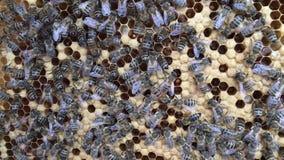 Den abstrakta sexhörningsstrukturen är honungskakan från bibikupan som fylls med guld- honung lager videofilmer