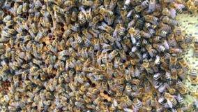 Den abstrakta sexhörningsstrukturen är honungskakan från bibikupan som fylls med guld- honung stock video