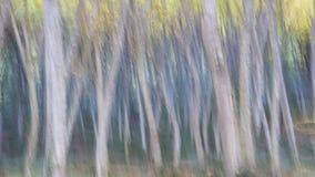 den abstrakta skogen gillar en målad konst Arkivfoton