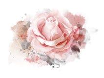 Den abstrakta vattenfärgen steg på vit bakgrund Vattenfärgmålningillustration royaltyfri illustrationer