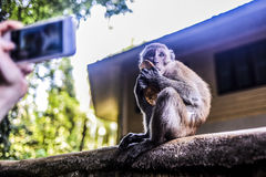 Den Affen essen, der durch Smartphone, Thailand fotografiert wird Lizenzfreie Stockfotografie