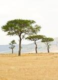 den africa kenya masaien plattar till reserven Arkivbild