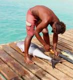 Den afrikanska fiskaren väger den catched nya tonfiskfisken, Kap Verde royaltyfria bilder