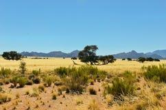Den afrikanska savannaen landskap Royaltyfria Foton