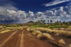 Den afrikanska savannahen Royaltyfria Bilder