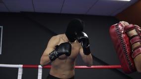 Den aggressiva boxaren arbetar med boxning tafsar med hans lagledare i cirkeln Övning av en serie av benstansmaskiner shirtless stock video