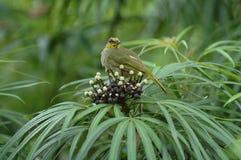 Den aktiva fågeln royaltyfri bild