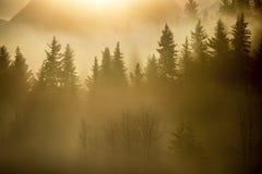 Den Alaska Januari morgonen med dimma på sörjer royaltyfria bilder