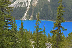 den alberta banff Kanada laken lokaliserade nationalparkpeyto Royaltyfri Fotografi