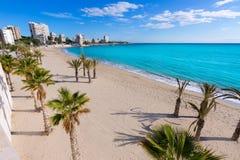 Den Alicante San Juan stranden med gömma i handflatan träd royaltyfri foto
