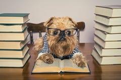 Den allvarliga hunden läser böcker Royaltyfri Bild