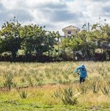 Den aloeVera jordbruksarbetaren ATV turnerar av de Curacao för den östliga sidan sikterna royaltyfri fotografi