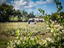 Den aloeVera lantgården ATV turnerar av de Curacao för den östliga sidan sikterna royaltyfri foto