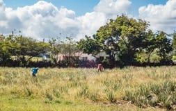 Den aloeVera lantgården ATV turnerar av de Curacao för den östliga sidan sikterna arkivfoton