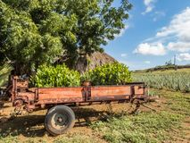 Den aloeVera lantgården ATV turnerar av de Curacao för den östliga sidan sikterna royaltyfria foton