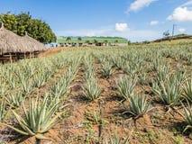 Den aloeVera lantgården ATV turnerar av de Curacao för den östliga sidan sikterna royaltyfri bild