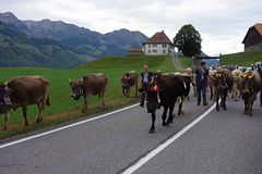 Den alpina mejerikon ståtar i Schweiz arkivfoton