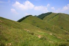 den alpina skogängen sörjer Arkivbild