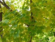 den ankommna hösten har Fotografering för Bildbyråer