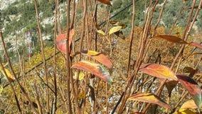 den ankommna hösten har royaltyfria bilder