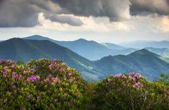 den appalachian bluen blommar bergkantfjädern royaltyfri bild