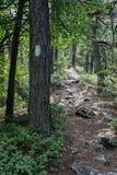 Den Appalachian slingan grejar på Ridge Fotografering för Bildbyråer