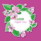 Den Apple blomningblomman, knoppen, bladet, färgrikt klotter för filialvektor skissar handen som dras som isoleras på rosa färger Royaltyfri Fotografi